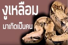 ระลึกชาติได้!งูเหลือมมาเกิดเป็นคน ด.ช.บัวลอย แสงวงศ์