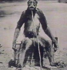 คนไม่ใช่ ลิงไม่เชิง