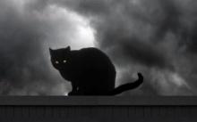 อาถรรพ์ แมวดำ! สื่อวิญญาณร้ายมาสู่คน กับเรื่องลี้ลับที่เล่าต่อๆกันมา!